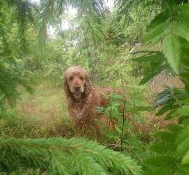 Osteopati hund, osteopat hund, behandling hund, behandling dyr
